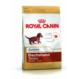 Teckel voeding van Royal Canin