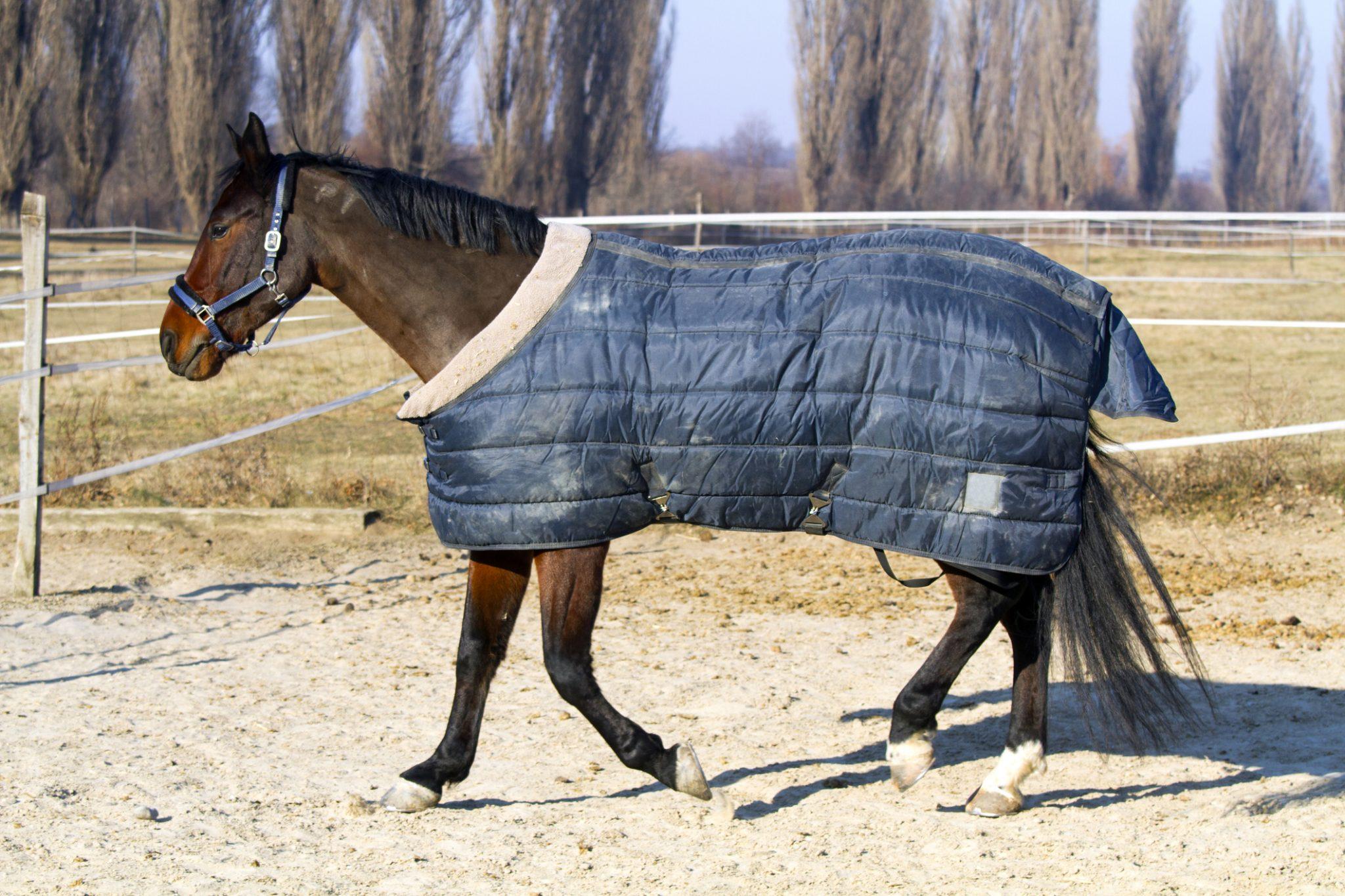 Paardendeken wasservice