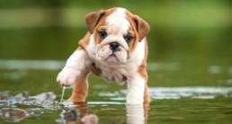 puppy bewegen prins