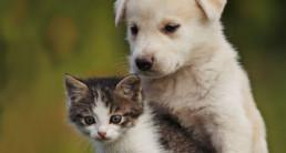 Wellness Core puppy en kitten voeding