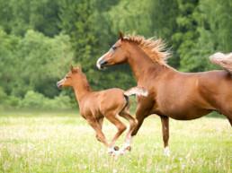 supplement paard