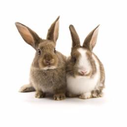 mannelijk en vrouwelijk konijn