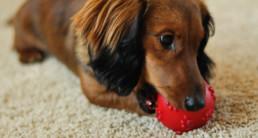 pup spelen