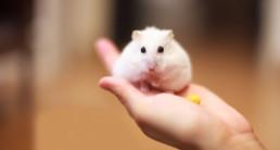 hamster omslag