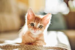 Diarree komt zowel bij kittens als bij volwassen katten regelmatig voor. Het kan verschillende oorzaken hebben. De darmen van je kitten kunnen bijvoorbeeld door een infectie, wormen of verkeerde voeding overstuur raken.