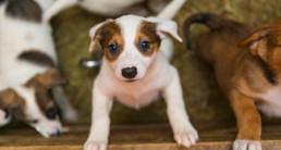 puppy ophalen benodigheden