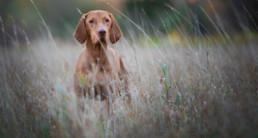 hond, mens, bescherming, vlooien, teken