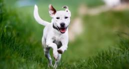 Chomper Wing-It, hondenspeelgoed, hond, speelgoed, apporteren