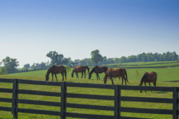 Many horses grazing at beautiful farm at Kentucky.