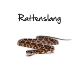 Rattenslang