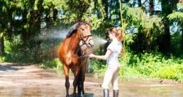 Paard aan het wassen en afkoelen