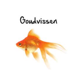 goudvissen subpagina