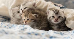 omslag kitty milk