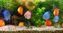 tropische vissen omslag