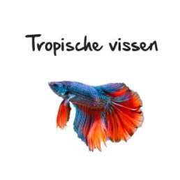 tropische vissen subpagina