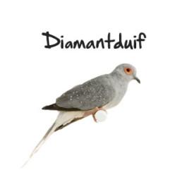 Subpagina foto's diamantduif