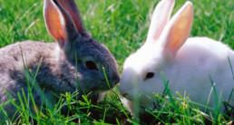 informatie konijnen