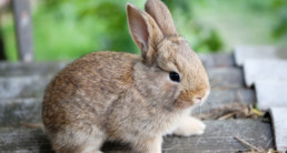 konijnenhokken schoonmaken