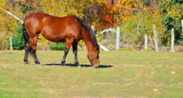 Weerstand paard in de herfst - supplementen