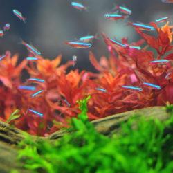 Top 5 Scholenvisjes Voor In Jouw Tropische Aquarium Pets Place