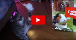 Video britt dekker dierendag kat
