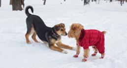 Hond kou jasje