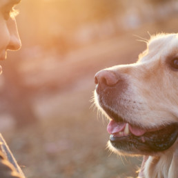 hond waar moet je rekening mee houden