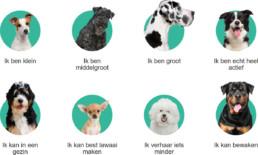 Rasoverzicht van Pets Place en Bazoeki