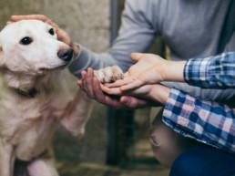 hond asiel