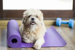 Dog sitting on a yoga mat