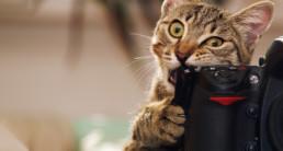 fotograferen van huisdieren