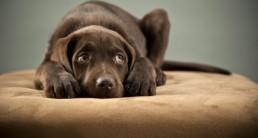 puppy bang ziek