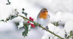 vogel winter