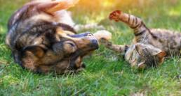 Vakantie met je huisdier in de tuin!