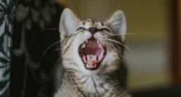 Header kat gebit