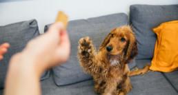 Basis trainen van je hond, kat, knaagdier en vogel