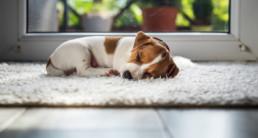 Je huis puppy proof maken