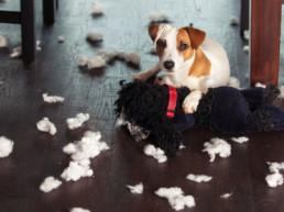 zelf hondenspeelgoed maken