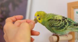 Zaden voor vogels of pellets