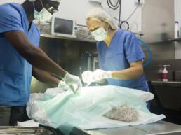 Castratie en sterilisatie bij de hond