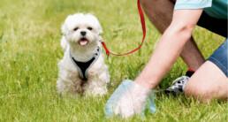 uitlaten hondenpoep