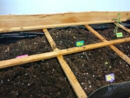 Nieuwe plek voor de moestuinplantjes