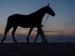 Verlichting paard - paardrijden in het donker