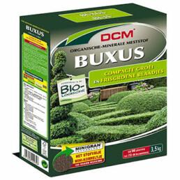 DCM buxus