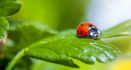 Milieuvriendelijk bestrijden