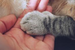 Overleden kat crematie dieren
